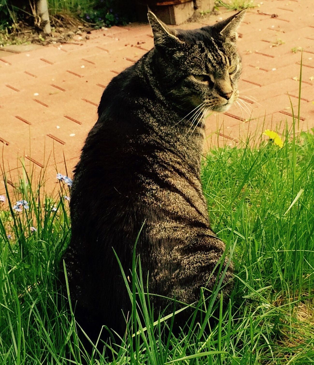 Tiger I Miss The Last Summer Hello World Lovely Weather