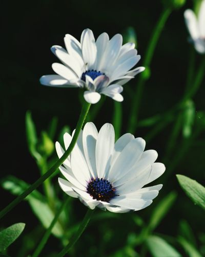 Flowers In Bloom Love ♥ Bluecolors Whiteleaves Green Color
