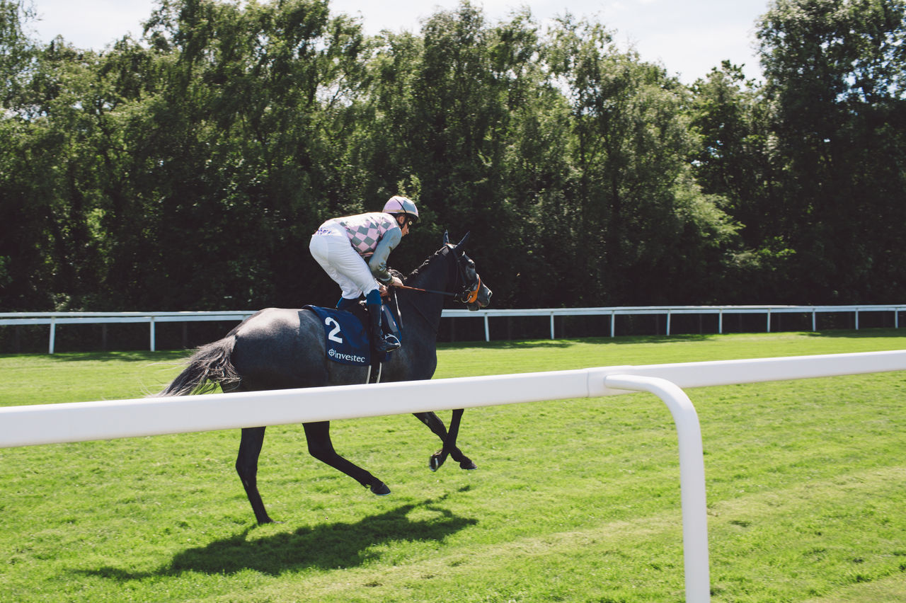 Animal Themes Competition Day Domestic Animals Epsom Downs Racecourse Field Full Length Grass Helmet Horse Horse Racing Horseback Riding Leisure Activity Lifestyles Mammal Nature One Animal One Person Outdoors People Real People Sport Sports Helmet Tree