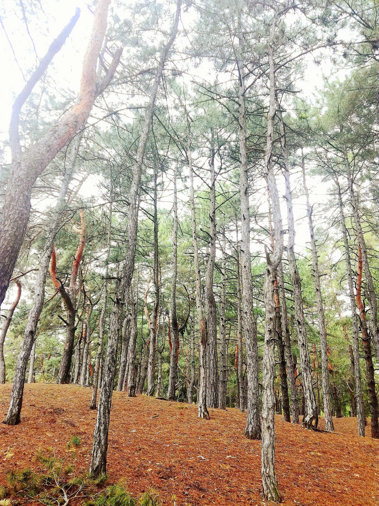 Лес прогулка