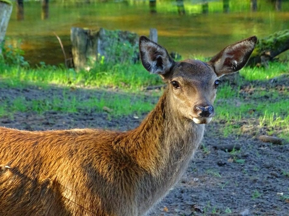 Animal Themes One Animal Focus On Foreground Mammal Looking At Camera Zoology Wild Blesswild Animals In The Wild Nature Wildlife Beauty In Nature Animal
