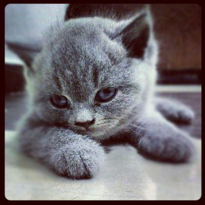 Instakittens Igcats Cute Lovely adorableposingjgnjeles