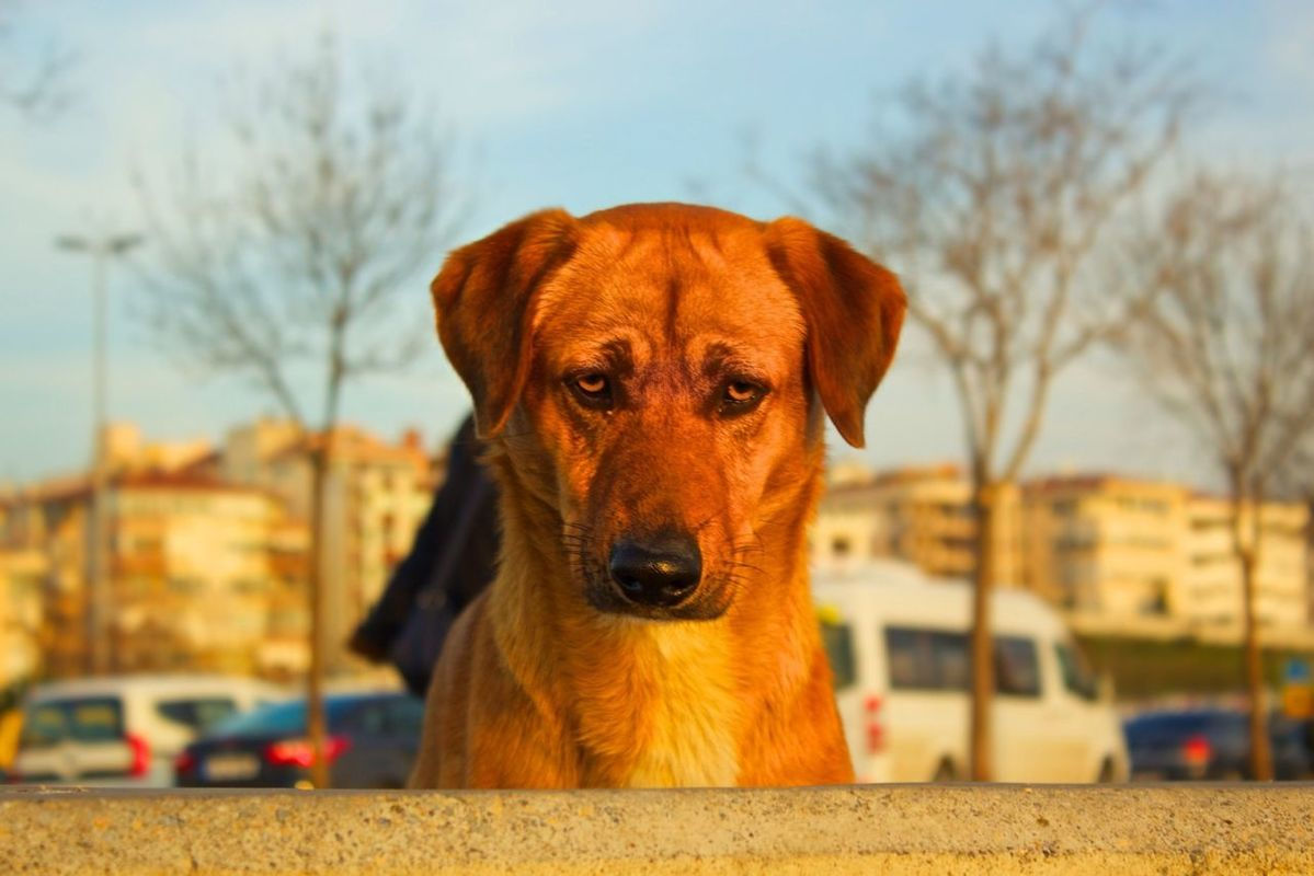bisgen streetphotography dog helloworld eye4photography  by Ersin Bisgen
