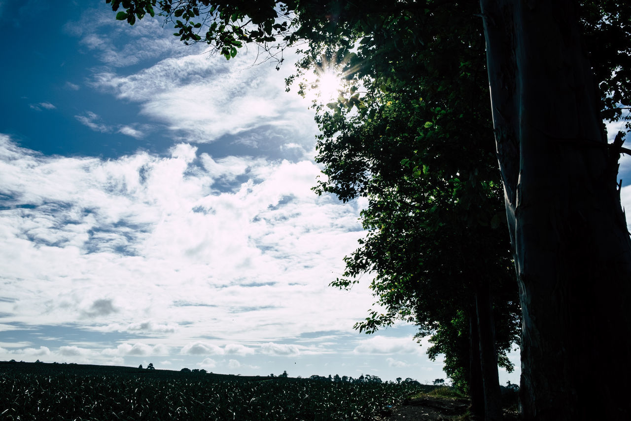 Beauty In Nature Cloud - Sky Copy Space Day Growth Light And Shadow Low Horizon Nature No People Outdoors Poetry Scenics Silhouette Sky Sun Sun Glare Tranquil Scene Tranquility Tree Against The Light