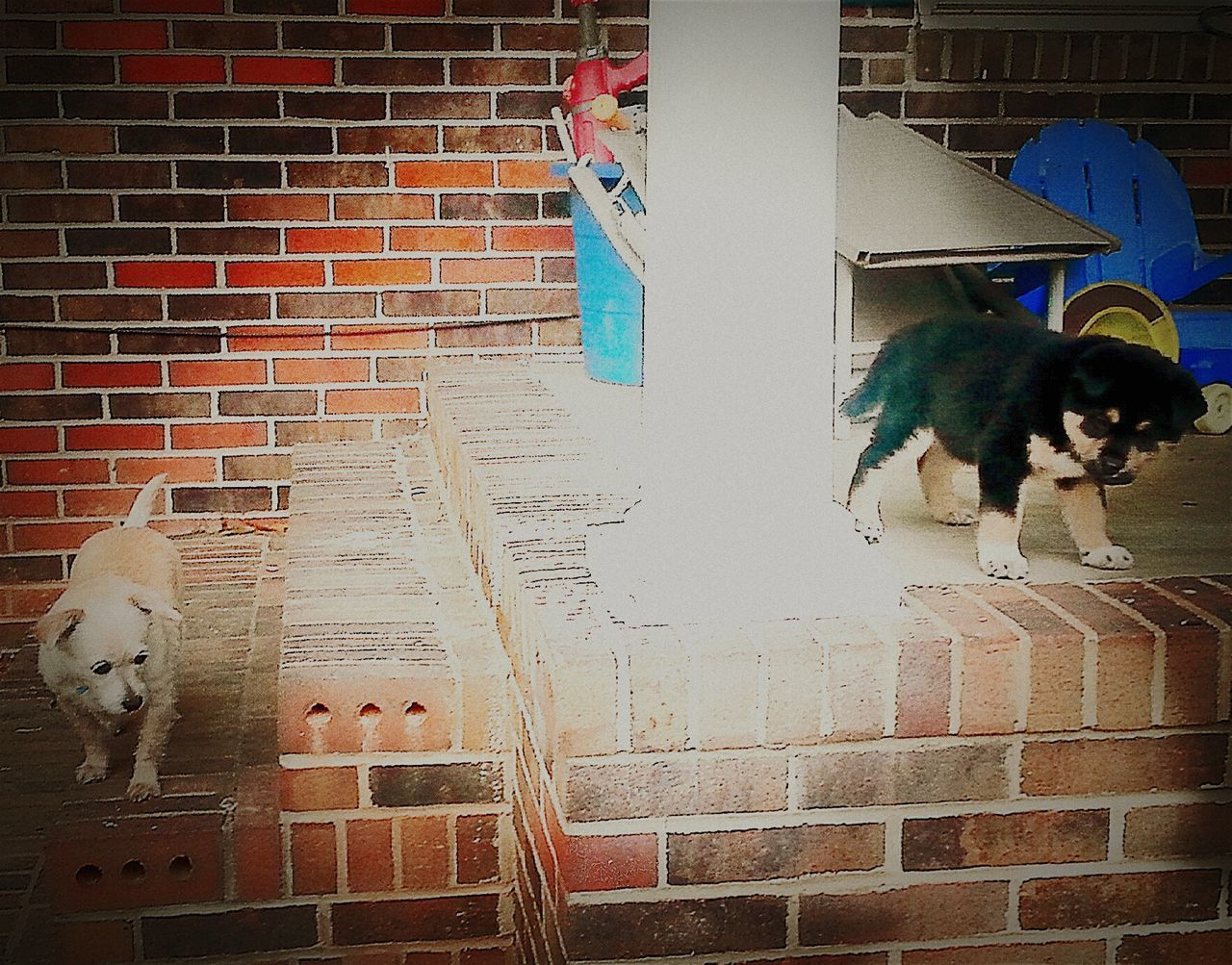 My Puppies Husky Mastiff Chihuahua Terrier Mixed Breeds Mutts Front Porch