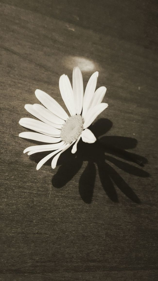 Check This Out Taking Photos Flower Collection Shadows & Lights White Flower Woodtable Check It Out