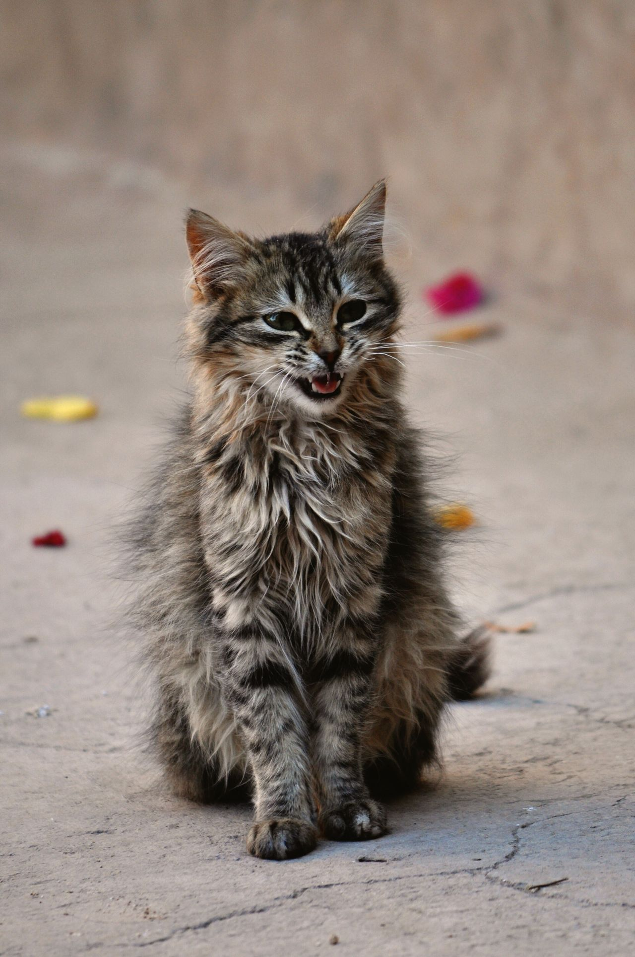 One Animal Cat Morocco Marrakech Animal Themes Mammal Feline Whisker No People Outdoors