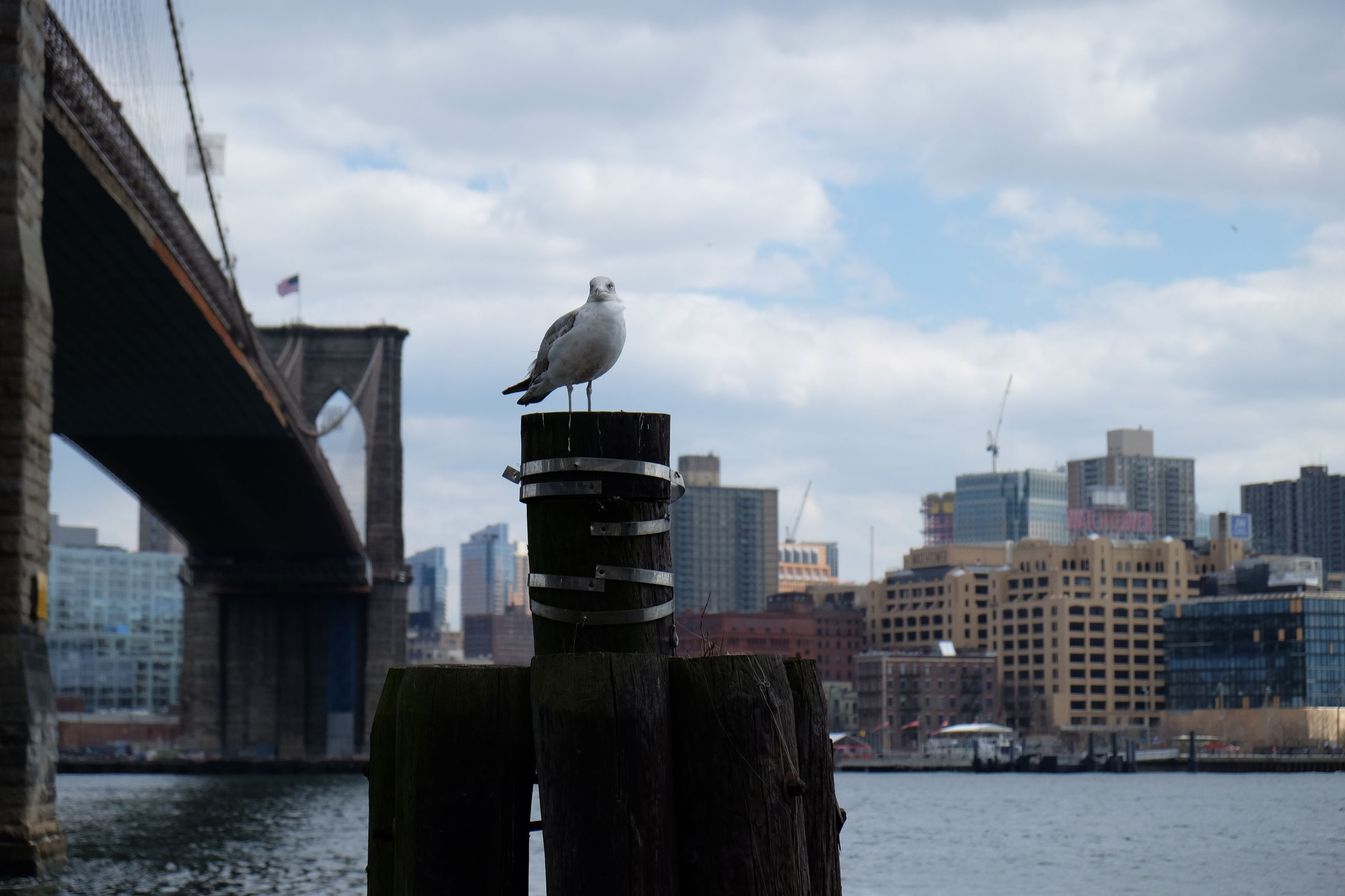 bird, animal themes, architecture, built structure, building exterior, animals in the wild, water, seagull, wildlife, sky, one animal, city, river, waterfront, sea, cloud - sky, cloud, perching, day, outdoors