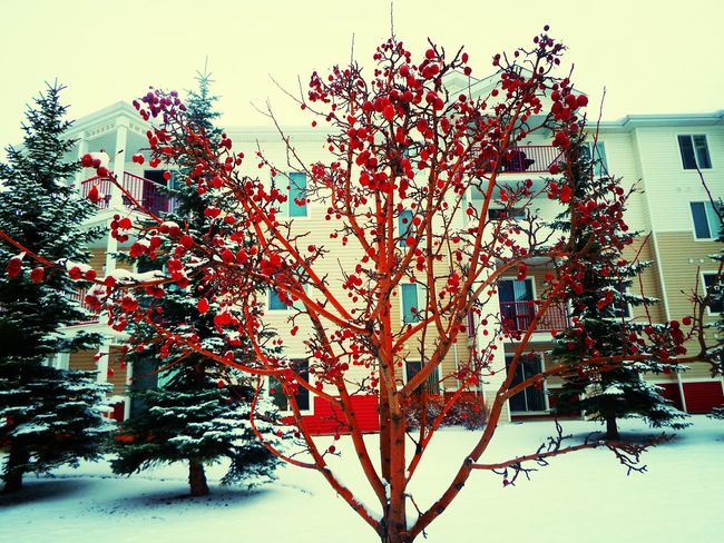 Winter Colors Cold Winter ❄⛄ Red Nature_collection Winter Wonderland