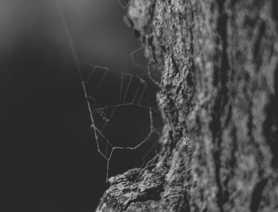 Spider web Spider Web Close-up Fragility Focus On Foreground No People Web Spider Nature Outdoors Complexity Beauty In Nature Day Survival Animal Themes