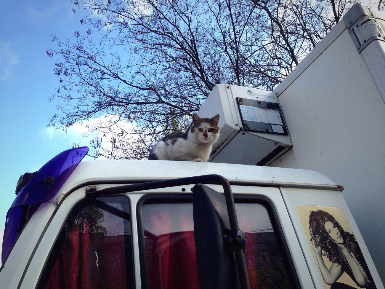 Cat Cat♡ Homeless Cats Cats