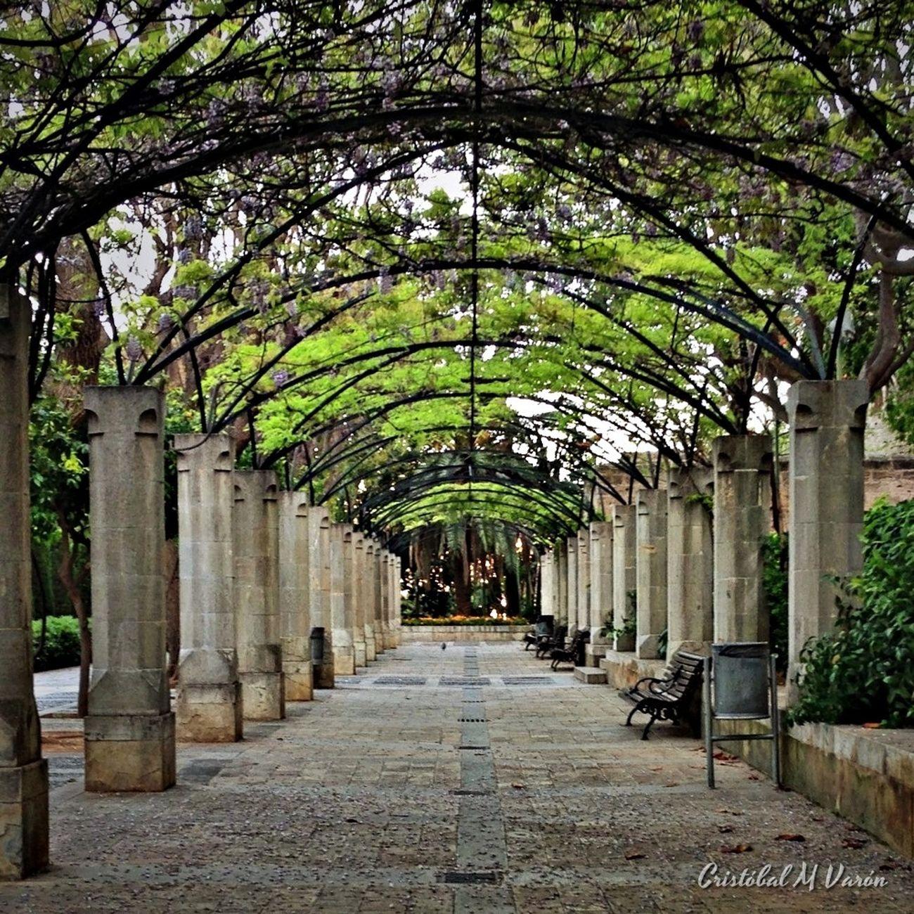Jardines Del Rey