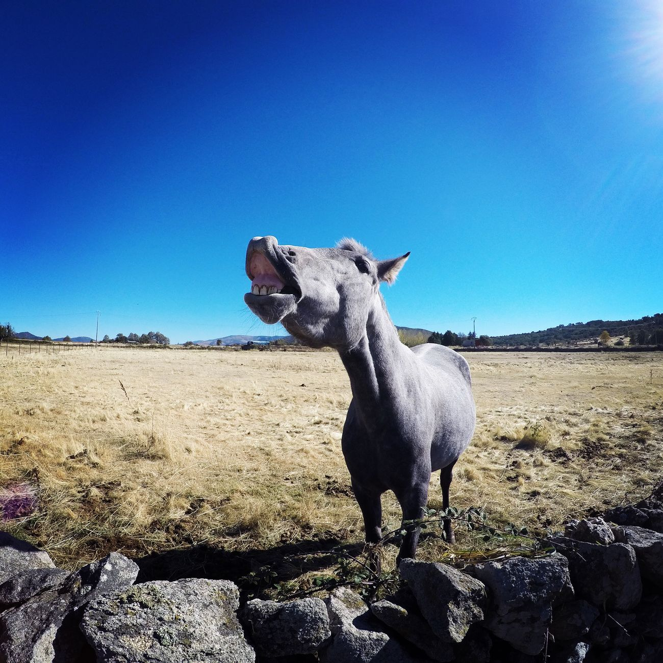 Horse Goprooftheday Nikond5300 Smile SPAIN Avila