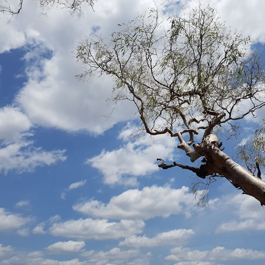 Cloud - Sky Tree Sky Nature Beauty In Nature Blue Day Outdoors Branch No People Mountain Northern Territory Australia NTAustralia Litchfield National Park Perspectives On Nature