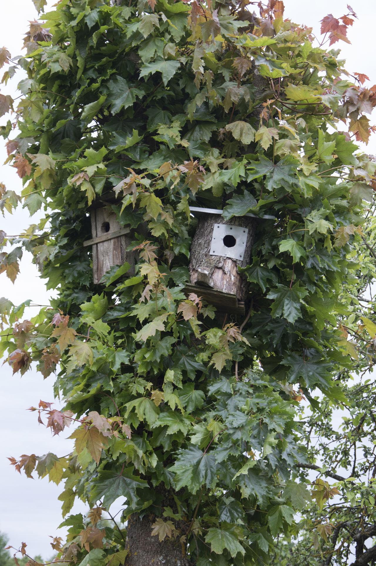 Bird Houses Green Nature Nesting Box Nesting Boxes Nesting Boxes Tree Nistkasten Outdoors Tree Two Two Nesting Boxes Vogelhäuser Birdbox