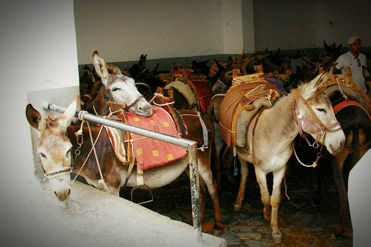 Donkeys Funny Animals Sweet Friendly Greece Friends EyeEmHolidays Mediterran Island Peace Tour On The Way