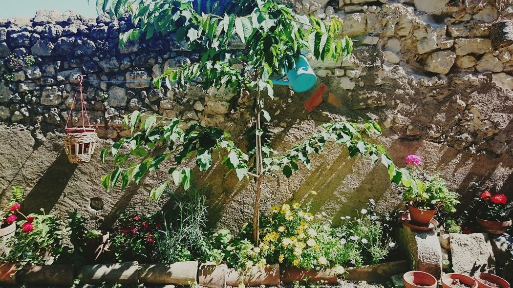 Jardin Ondiraitlesud