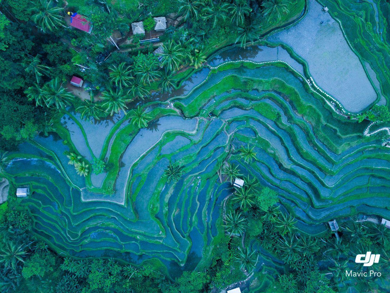 tegalalang rice terrace Ubud Drone  Rice Paddy First Eyeem Photo The Great Outdoors - 2017 EyeEm Awards