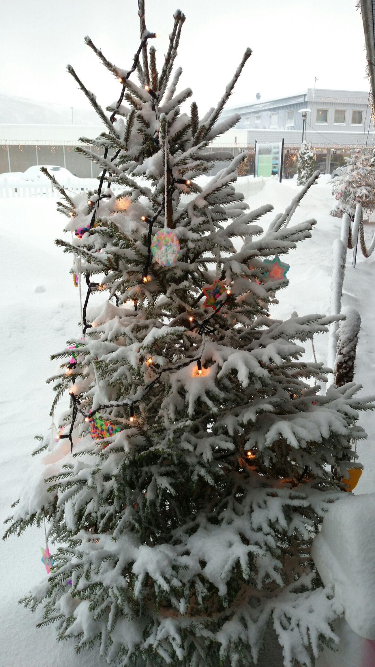 Eide På Nordmøre Norway Snow :) Christmas Tree