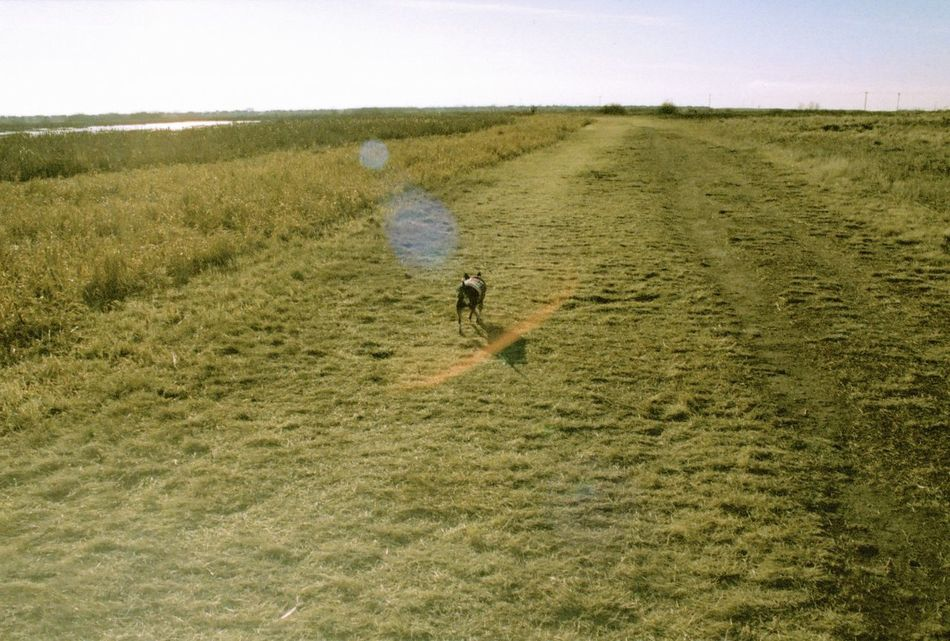 35mm Film Agriculture Animal Themes Beauty In Nature Day Dog Drone  Field Film Film Photography Grass Growth Landscape Mammal Minolta Minolta Maxxum Nature One Person Outdoors Real People Rural Scene Sky
