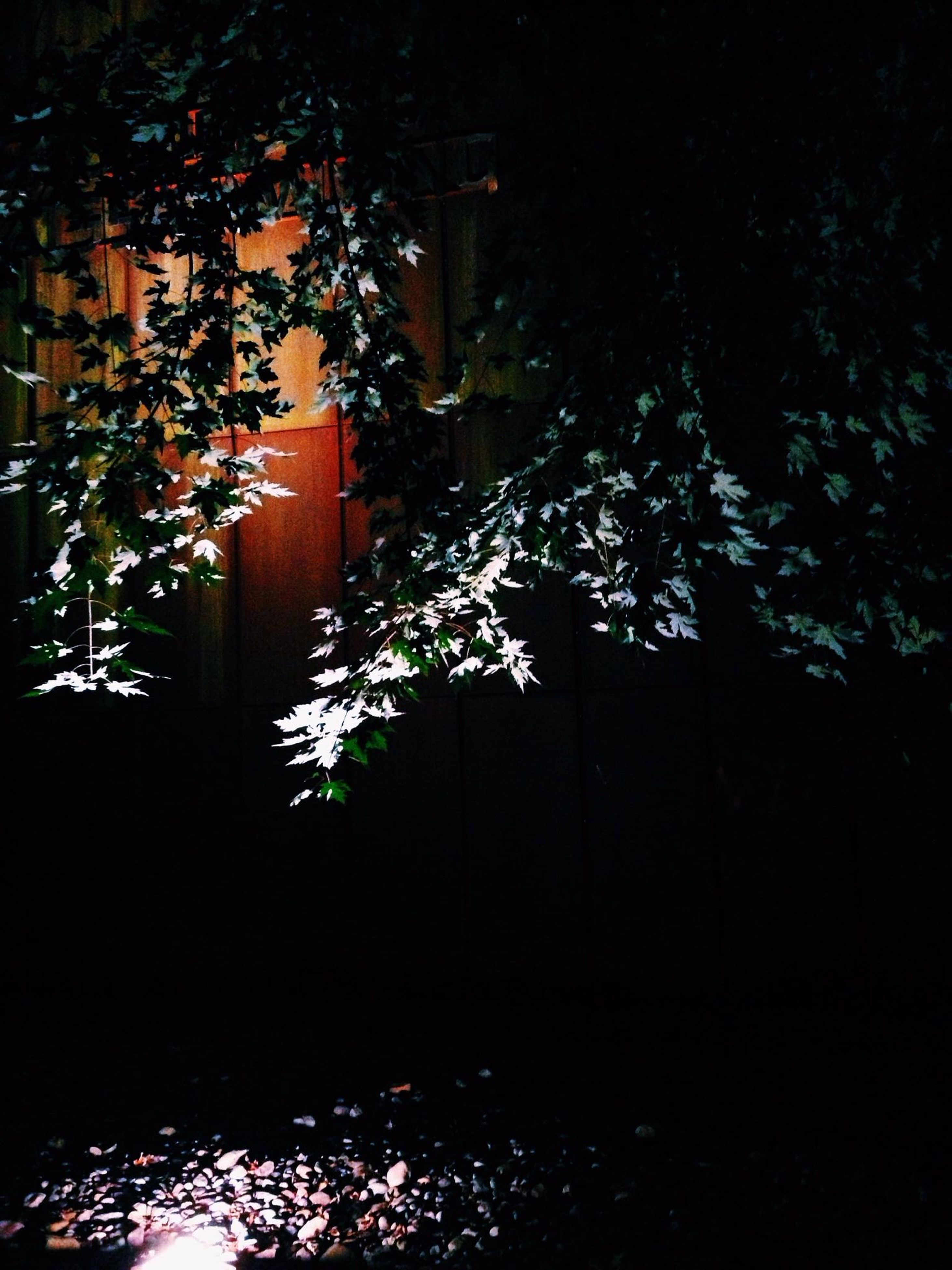 night, illuminated, growth, water, flower, plant, tree, built structure, dark, nature, building exterior, architecture, lighting equipment, reflection, no people, outdoors, beauty in nature, potted plant, house, light - natural phenomenon