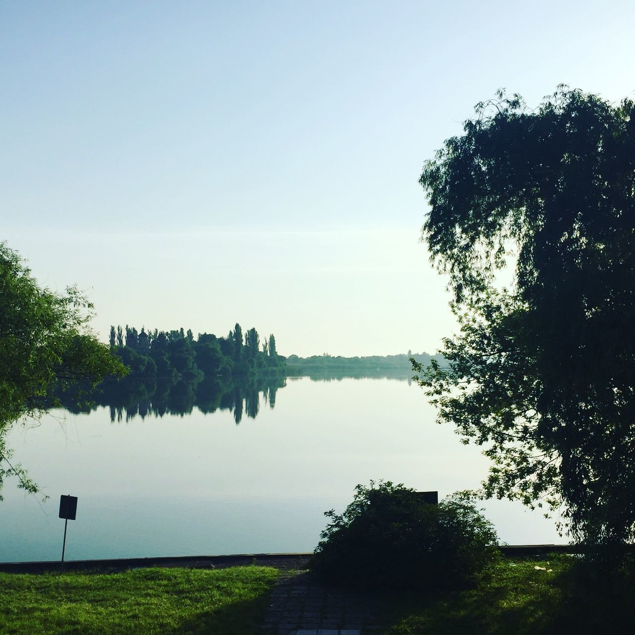 tree, nature, water, lake, beauty in nature, tranquil scene, growth, tranquility, clear sky, no people, outdoors, day, scenics, plant, sky, grass