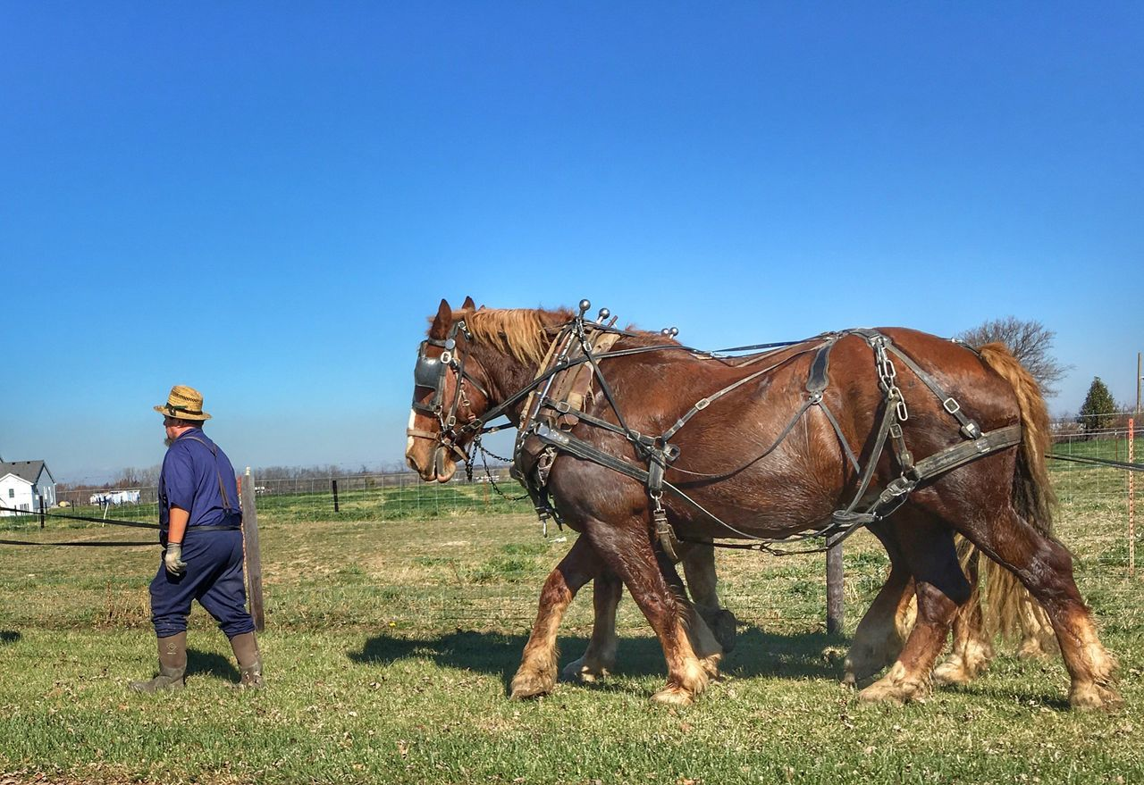 Busy busy busy time to plow Amish Country Amish Life Horse Real People Clear Sky Domestic Animals Blue Grass Mammal Field Animal Themes Working Animal Day Outdoors One Person Nature Full Length Sky Beauty In Nature