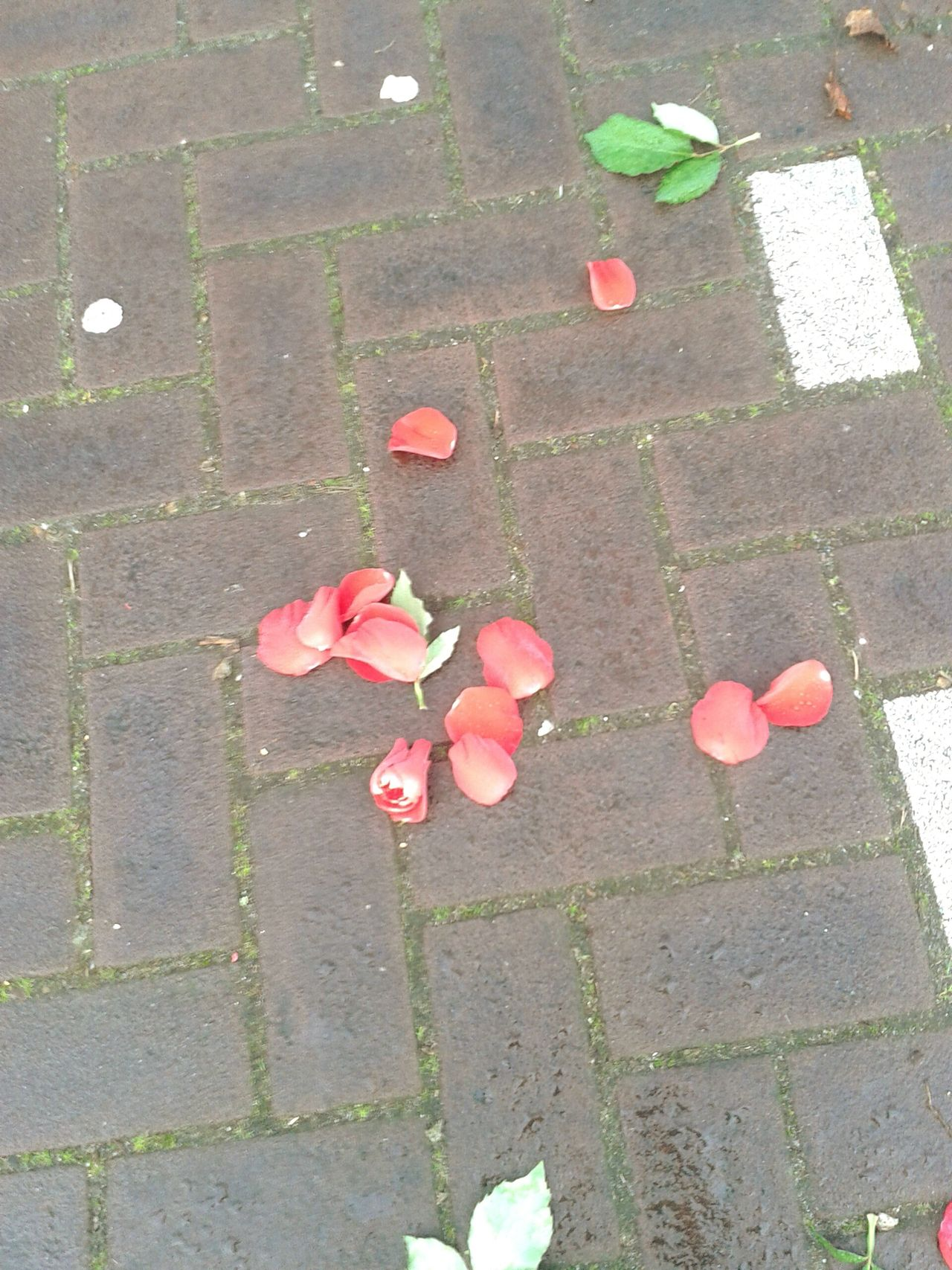 Looks like a lovestory ended after valentinesday at the parkinglot Ended Love Story Crushed Rose Crushed Dreams After Valentines Day Street Stones Petals High Angle View Multi Colored No People Pink Color Outdoors Day Close-up Rainy Day After Rain