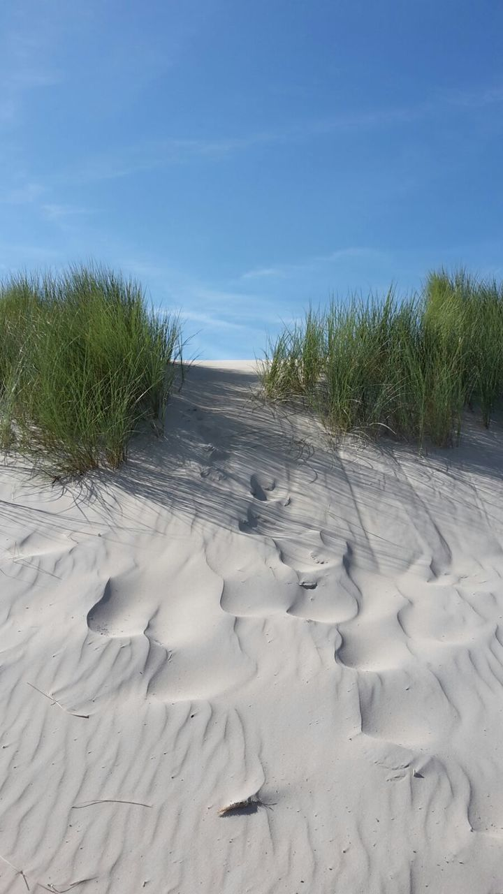 sand, nature, tranquility, tranquil scene, sky, sand dune, day, beach, scenics, outdoors, tire track, beauty in nature, landscape, no people, marram grass, arid climate, desert, grass, tree, water