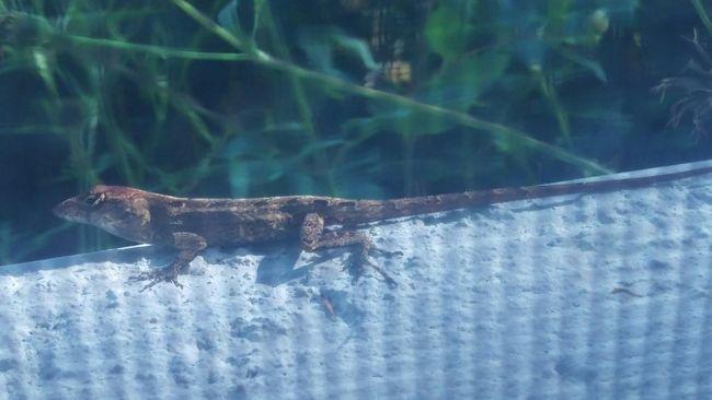 Garden Lizard Taking Photos Check This Out Enjoying Life Htcphotography