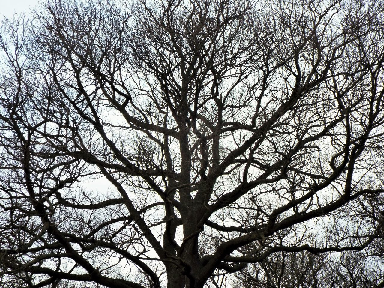 tree, branch, low angle view, nature, bare tree, beauty in nature, outdoors, tranquility, day, no people, backgrounds, forest, scenics, sky