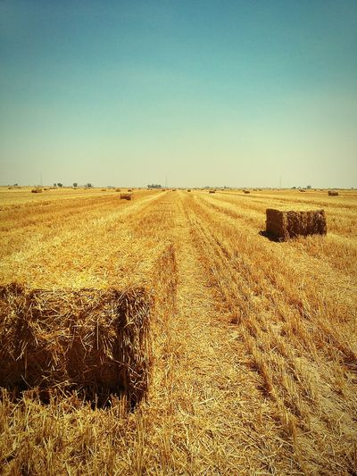 FOLLOW THE YELLOW LINE....... Mexicali Baja California Countryside Countrylifestyle Harvest Season Non-urban Scene
