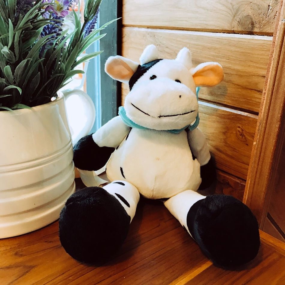 Stuffed Toy Toy Animal Representation No People Indoors  Table Close-up Day Cow Toy