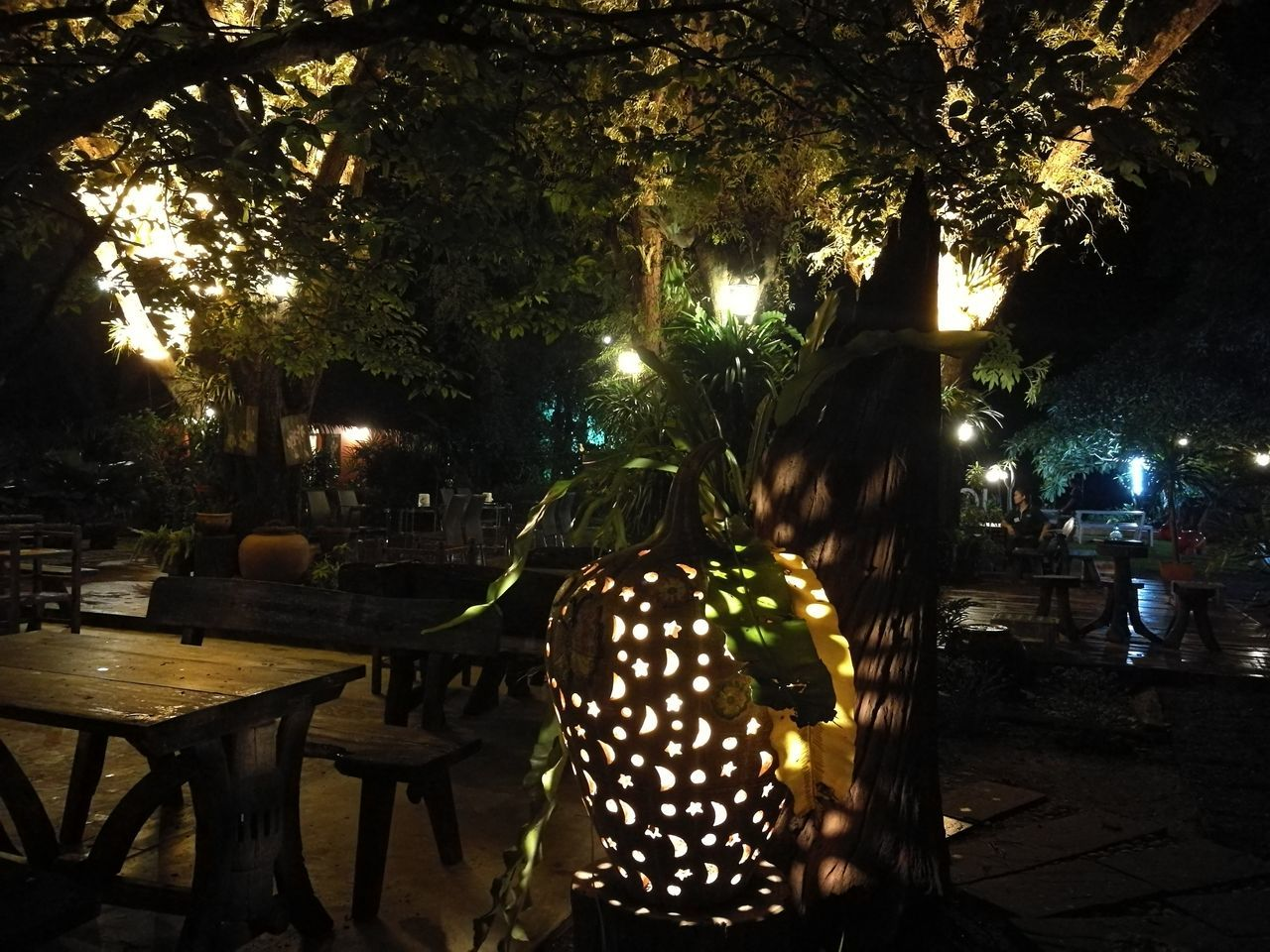 tree, night, illuminated, table, outdoors, growth, christmas lights, real people, one person, nature, people