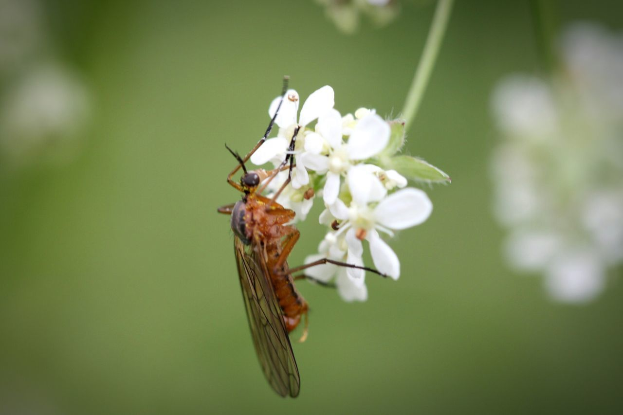 insect, flower, nature, animal themes, one animal, animals in the wild, no people, fragility, close-up, day, beauty in nature, outdoors, growth, plant, freshness, flower head