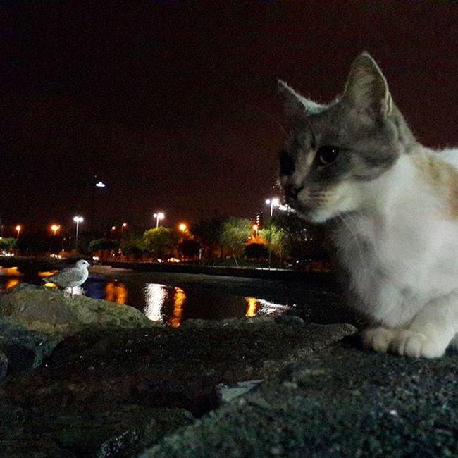 Istanbul Bostancı Marmaradenizi Martı Kedi Sudakiyansıma