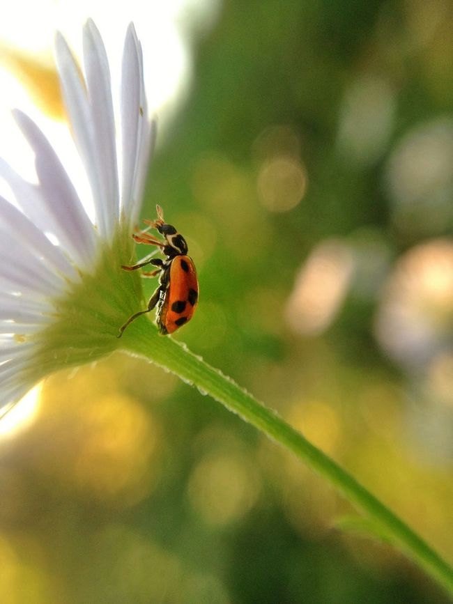 Hello World Nature_collection EyeEm Nature Lover Macro_collection