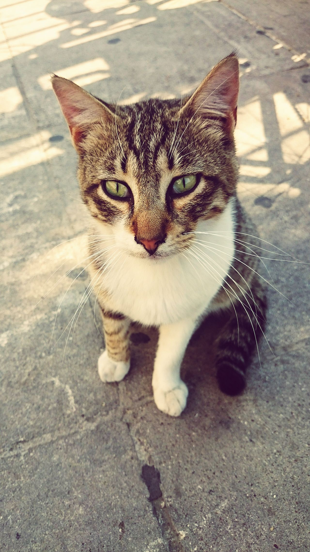 Animal Photography Street Cats Portrait Limassol Cyprus