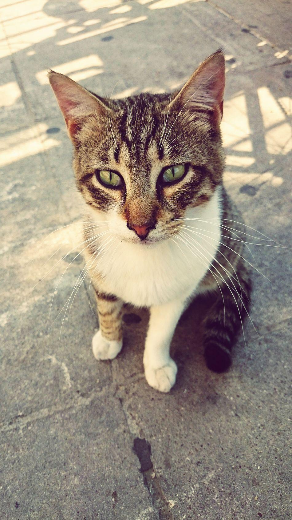 Animal Photography Street Cats Portrait Limassol Cyprus
