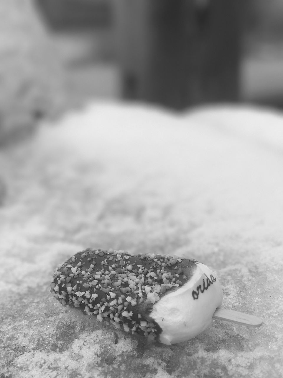 close-up, no people, sand, one animal, beach, animal themes, day, food, indoors, nature