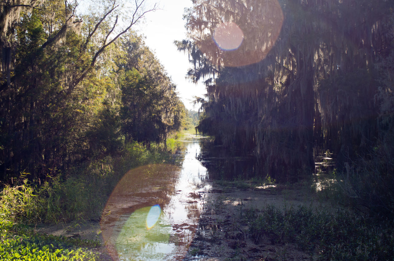 Alligator Lake Beauty In Nature Cypress Cypress Trees  Growth Marsh Marshland  Nature No People Non-urban Scene Outdoors Reflections Remote Scenics Solitude Sun Glare Swamp Tranquil Scene Tranquility Trees Water
