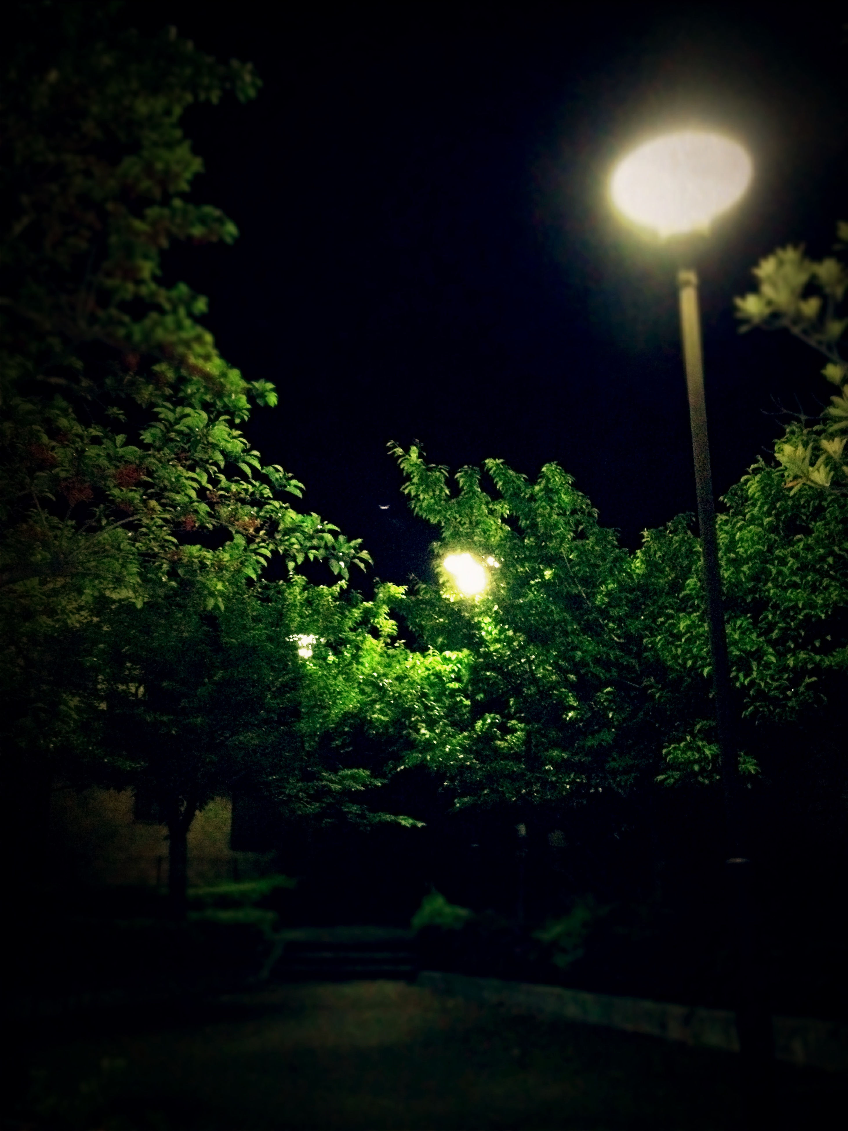 night, street light, illuminated, tree, lighting equipment, low angle view, green color, sky, growth, tranquility, nature, glowing, electricity, electric light, outdoors, lamp post, no people, light - natural phenomenon, beauty in nature, clear sky