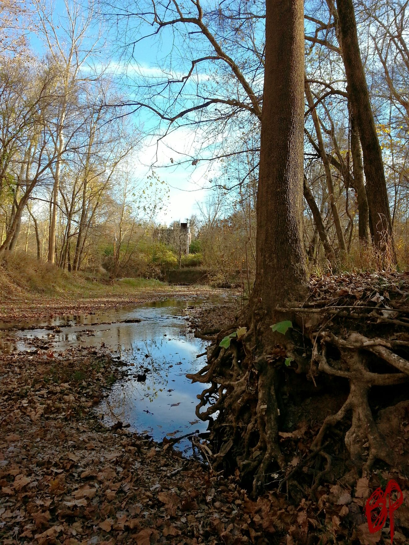 E-vap Roots Stream Nature Fall