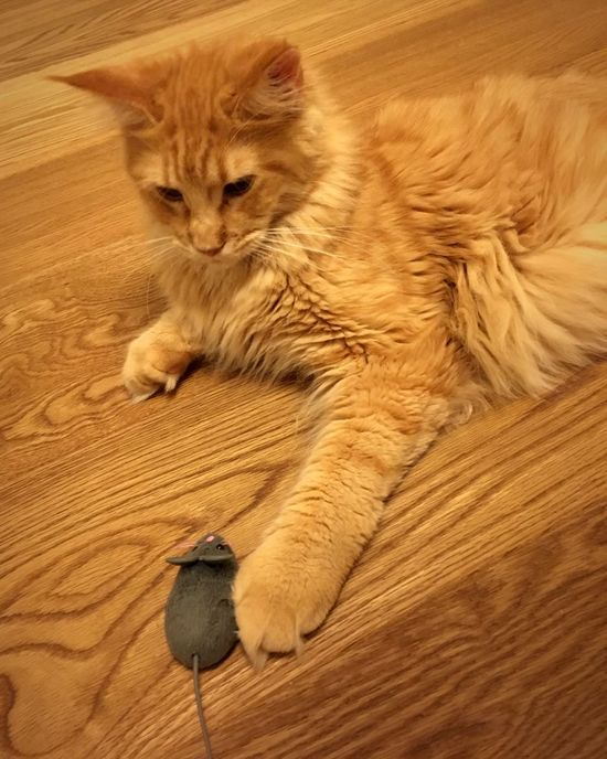 Meins Cat Mouse Cat And Mouse Yellow Color Red Cat Wooden Texture Wooden Floor Furry Fur Texture No People Animal Pet Toy Playing