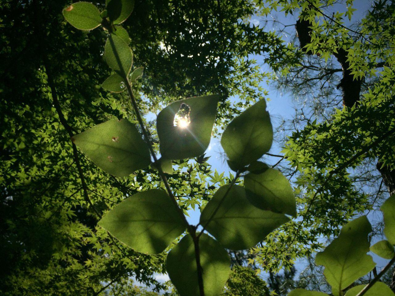 木漏れ日。 Tree Nature Leaf Green Color Beauty In Nature Sky 葉漏れ日。