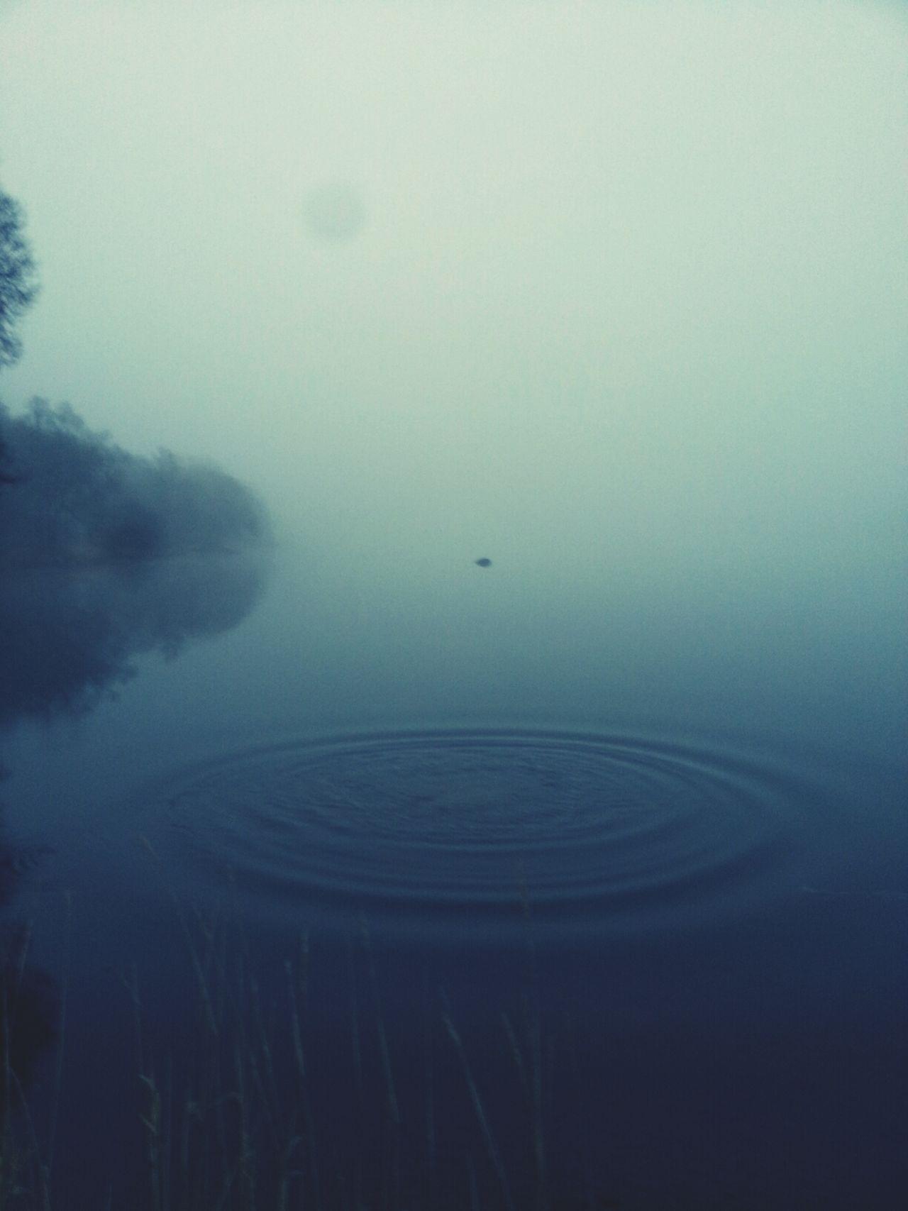 fog Fog