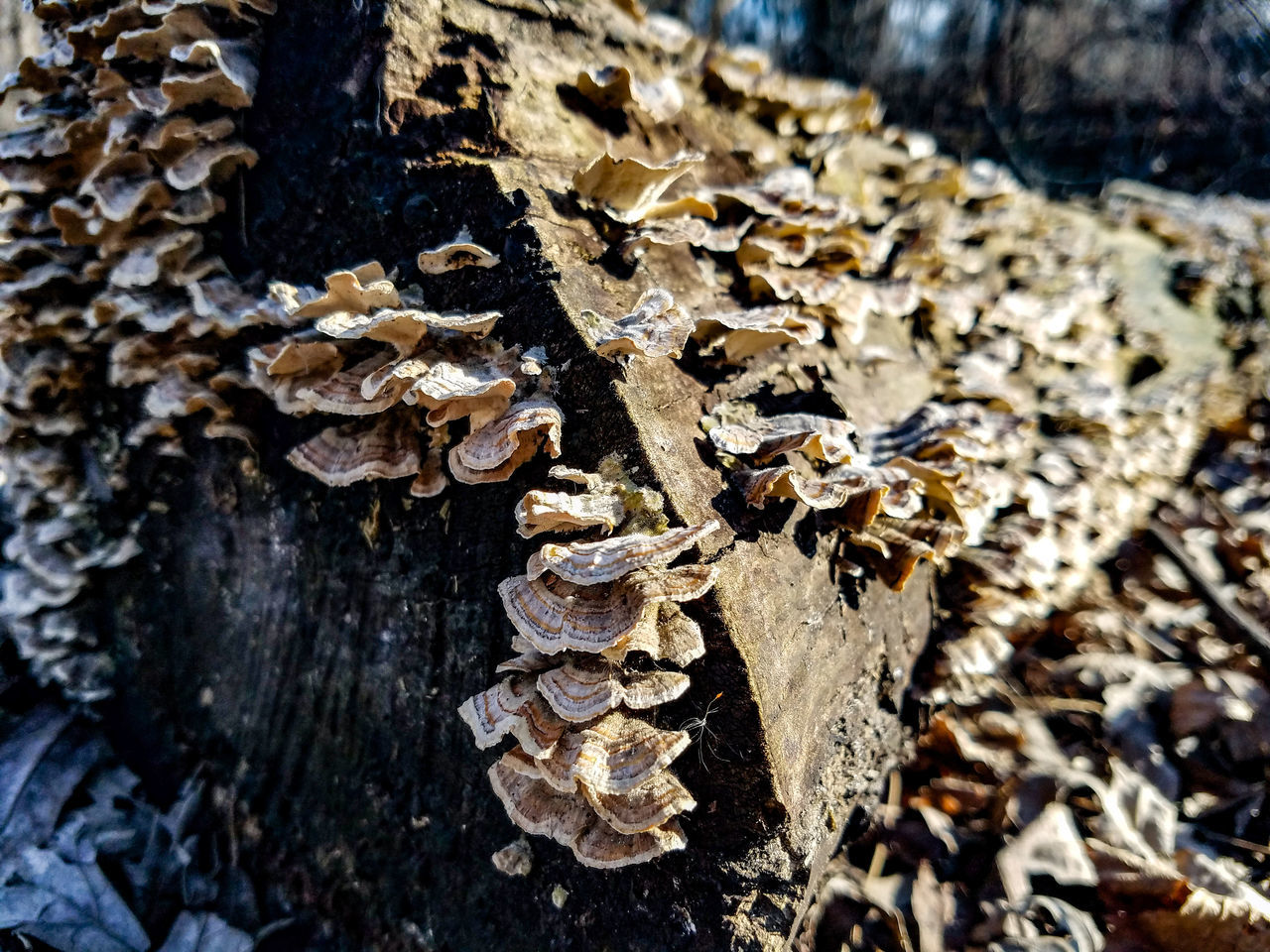 Close-up Nature No People Outdoors Sunlight Day Beauty In Nature Growth Minnesota Paynesville Crow River Nature ParkMarch Nature Park  Springtime Spring Fungus Mushrooms Fallen Tree Forest Tree Trees Explore Bare Tree Tree Trunk Landscape