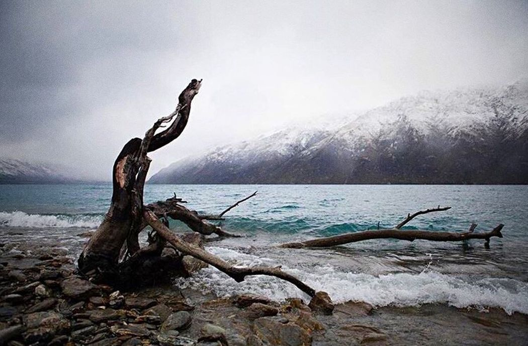 Water Log Tranquil Scene Dead Plant Tranquility Driftwood Scenics Wood - Material Fallen Tree Mountain Dead Sea Lake Non-urban Scene Fallen Nature Idyllic Beauty In Nature Dried Plant Death