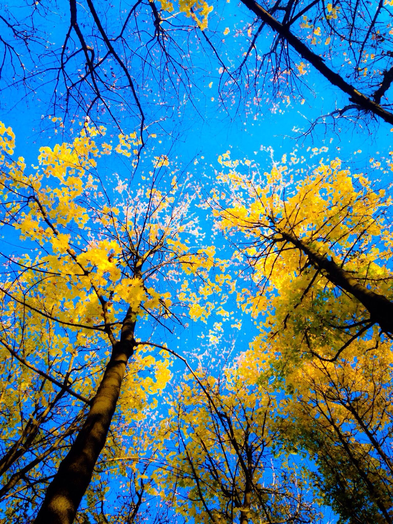 Пролет.. Лято ... Есен.. Зима