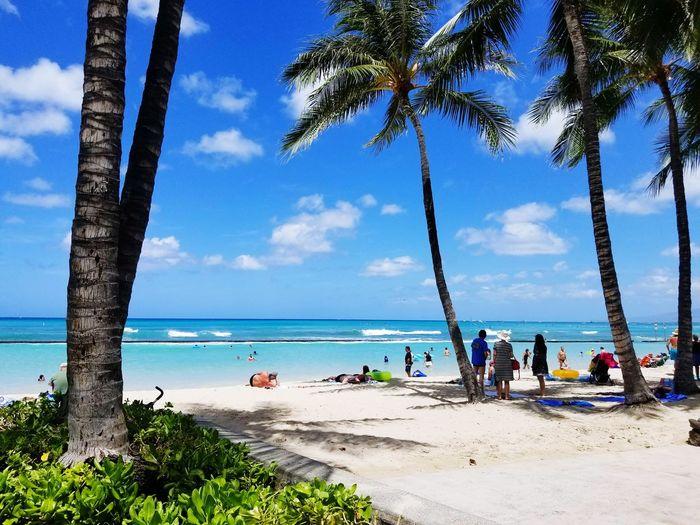 Waikiki Beach, Hawaii Beach Sea Tree Palm Tree Horizon Over Water Water Sand Sky Nature Tropical Climate Cloud - Sky Blue Beauty In Nature Vacations Scenics Outdoors Day Travel Destinations Tree Trunk People Waikiki Beach Hawaii
